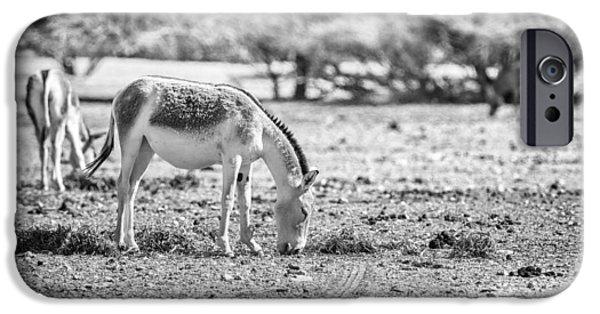 Wild Animals iPhone Cases - Peaceful iPhone Case by Liran Eisenberg