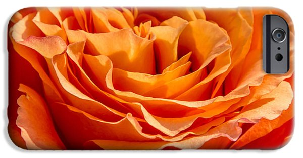 Close Up Pyrography iPhone Cases - Peach Rose Close Up iPhone Case by Olga Photography