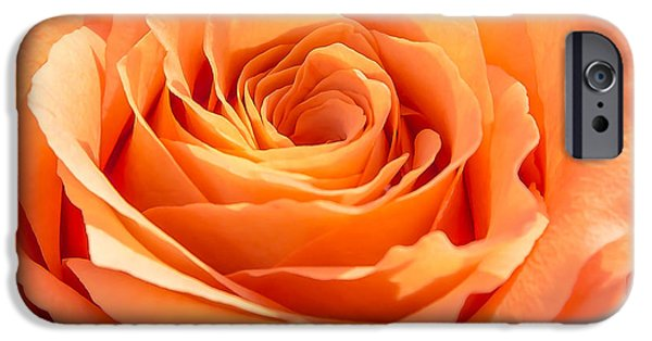Close Up Pyrography iPhone Cases - Peach Rose iPhone Case by Olga Photography