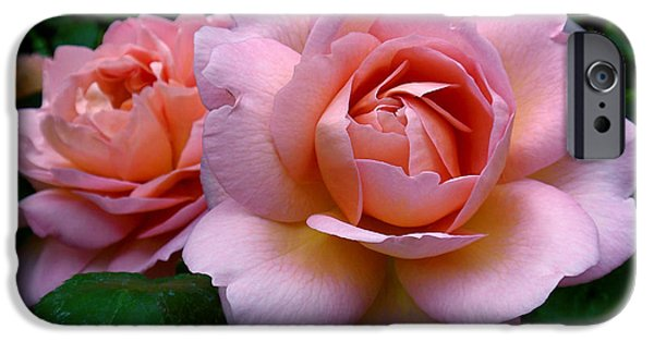Peach Rose iPhone Cases - Peachy Pink iPhone Case by Rona Black