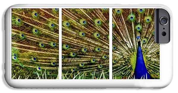 Business Digital Art iPhone Cases - Peacock feathers in frame triptych iPhone Case by Geraldine Scull