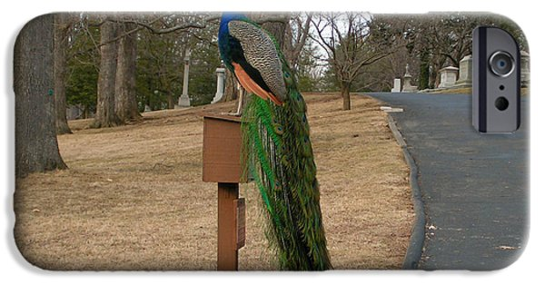 Cemetary iPhone Cases - Peacock in the Cemetary iPhone Case by Kim Upton