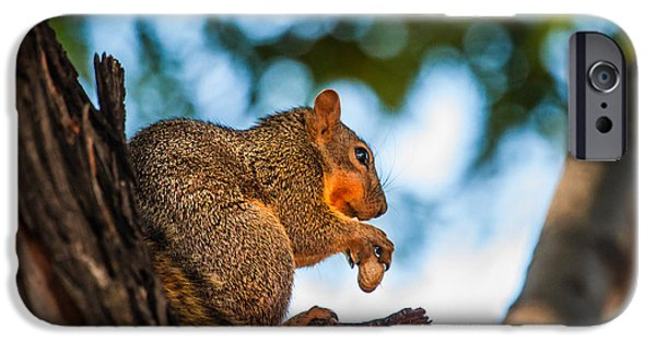 Fox Squirrel iPhone Cases - Peanut Time iPhone Case by Robert Bales