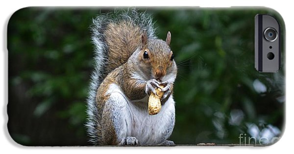 Rural iPhone Cases - Peanuts for Breakfast iPhone Case by JW Hanley