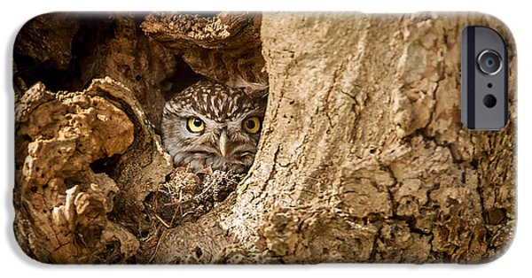 Animals Photographs iPhone Cases - Peek a boo iPhone Case by Paul Neville