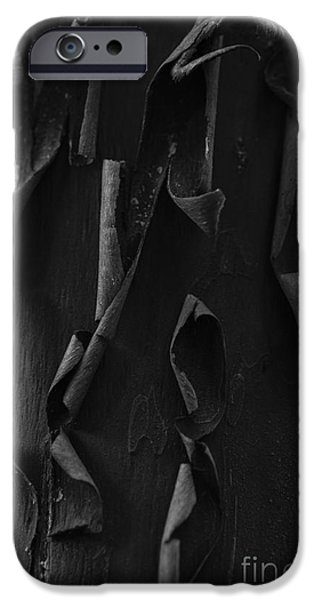 Chip iPhone Cases - Peeling Bark iPhone Case by Jim Corwin