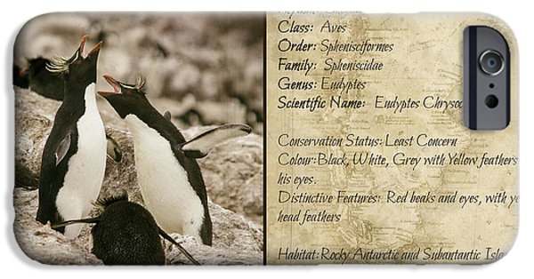 Marine iPhone Cases - Peguin taxonomy card iPhone Case by Hernan Caputo