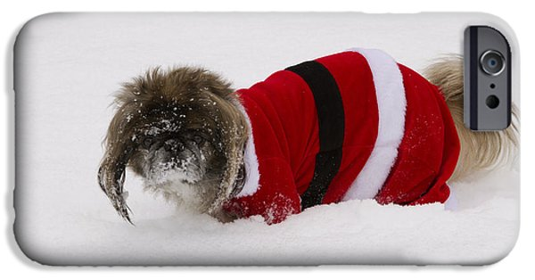 Pekingese iPhone Cases - Pekingese Dog In Santa Outfit iPhone Case by Kenneth M. Highfill