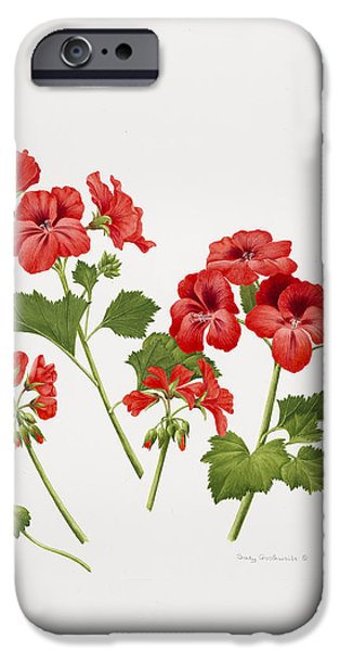 Flora Drawings iPhone Cases - Pelargonium Geranium iPhone Case by Sally Crosthwaite