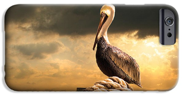 Recently Sold -  - Storm iPhone Cases - Pelican after a storm iPhone Case by Mal Bray