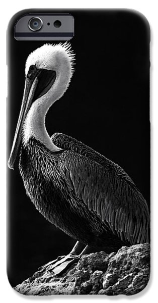 Snake iPhone Cases - Pelican Black and White iPhone Case by Mark Kiver