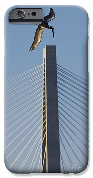 Pelicans iPhone Cases - Pelican Diving Arthur Ravenel Jr Bridge over the cooper river in Charleston South Carolina iPhone Case by Dustin K Ryan
