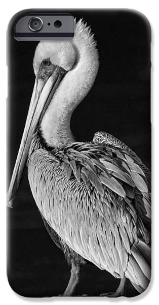 Fauna iPhone Cases - Pelican Portrait - black and white iPhone Case by HH Photography