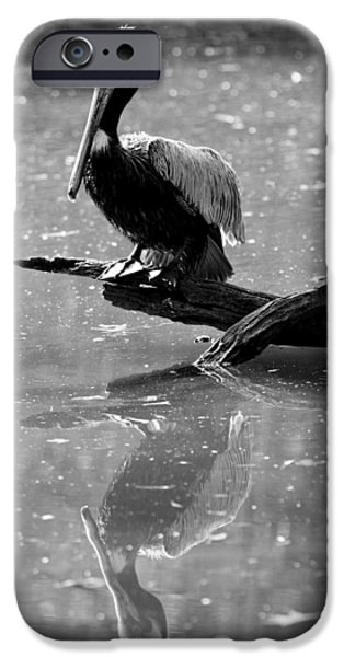 Pelicans iPhone Cases - Pelican Reflections iPhone Case by Dustin K Ryan