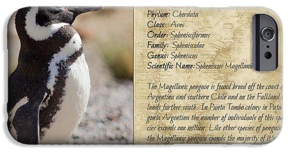 Marine iPhone Cases - Penguin taxonomic card V iPhone Case by Hernan Caputo