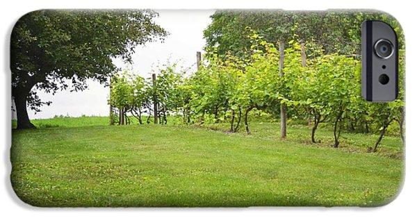Vineyard Prints iPhone Cases - Pennsylvania Vineyard Field iPhone Case by Andrea Hazel Ihlefeld