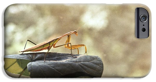 Preditor iPhone Cases - Pensive Mantis iPhone Case by Douglas Barnett