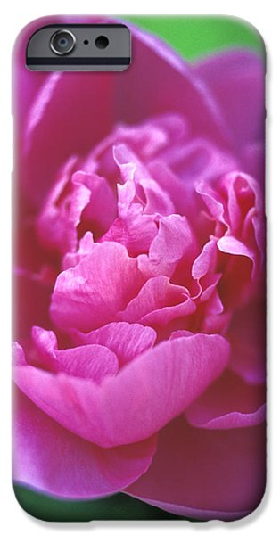 Peony in Pink iPhone Case by Kathy Yates