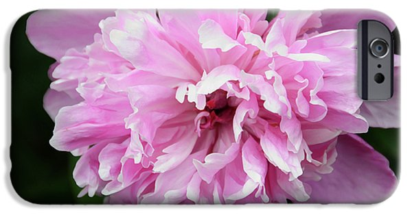 Peony Perfection iPhone Case by Angelina Vick