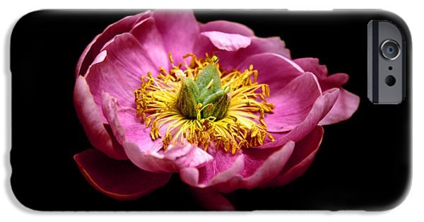 Peonies iPhone Cases - Peony Pride iPhone Case by Jessica Jenney