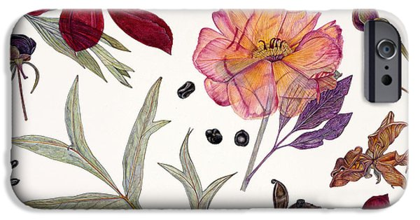 Flora Drawings iPhone Cases - Peony Specimens iPhone Case by Rachel Pedder-Smith