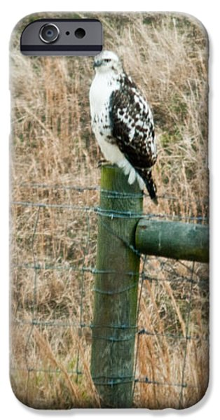 Perched Hawk iPhone Case by Douglas Barnett