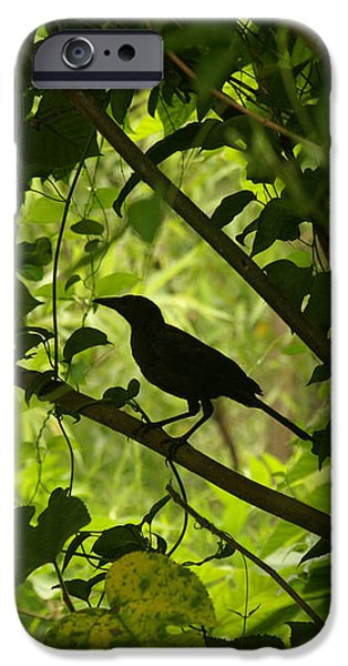 Perched in Green  iPhone Case by Jack Norton