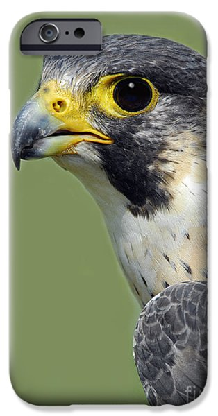 Nature Study iPhone Cases - Peregrine Falcon Vertical iPhone Case by Timothy Flanigan