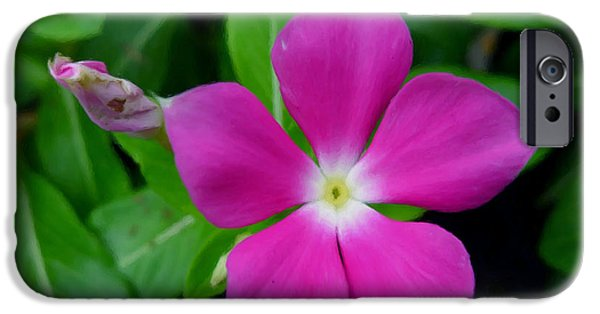 Watercress iPhone Cases - Periwinkle flower iPhone Case by Lanjee Chee