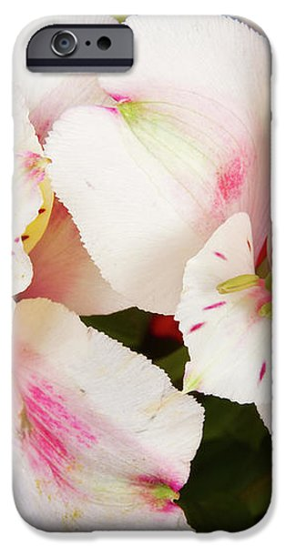 Peruvian Lilies  Flowers White and Pink Color Print iPhone Case by James BO  Insogna