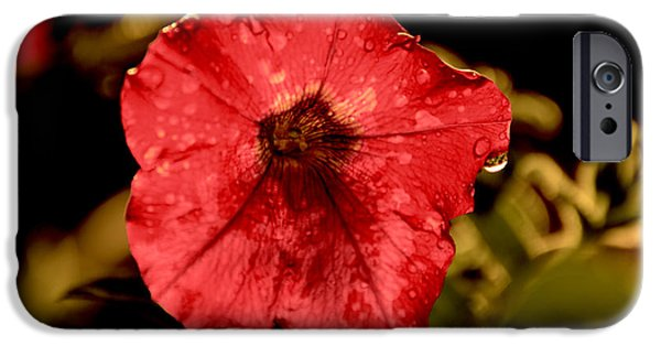Raining Tapestries - Textiles iPhone Cases - Petunia after rain iPhone Case by James Hennis