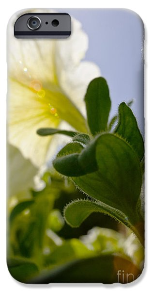 Petunia and Sunflare iPhone Case by Ray Laskowitz - Printscapes