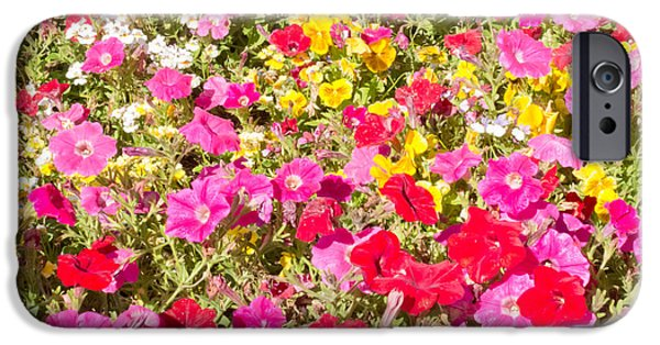 Industry iPhone Cases - Petunia flower garden nature background pattern iPhone Case by Stephan Pietzko