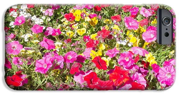 Industry iPhone Cases - Petunia flower nature garden background pattern iPhone Case by Stephan Pietzko