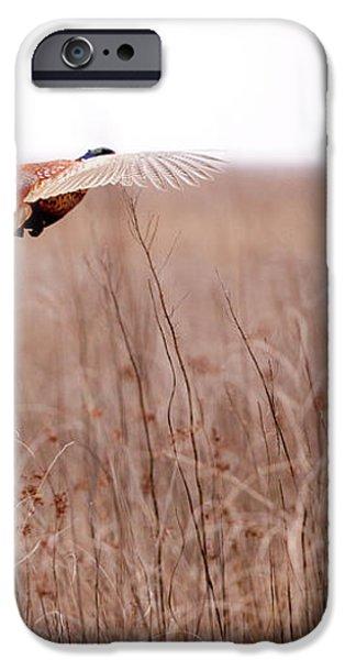 Pheasant in flight iPhone Case by Gabriela Insuratelu