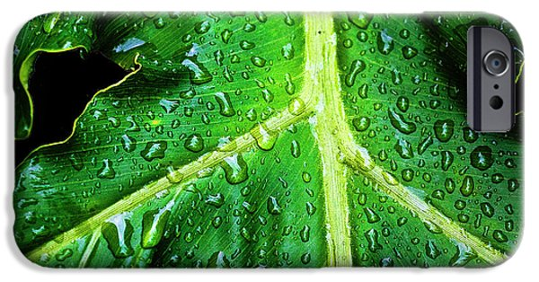 Philodendron iPhone Cases - Philodendron Rain iPhone Case by Scott Pellegrin