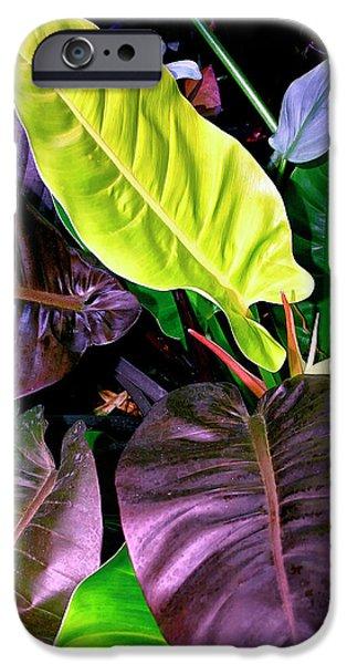 Philodendron iPhone Cases - Philodendron iPhone Case by William Dey