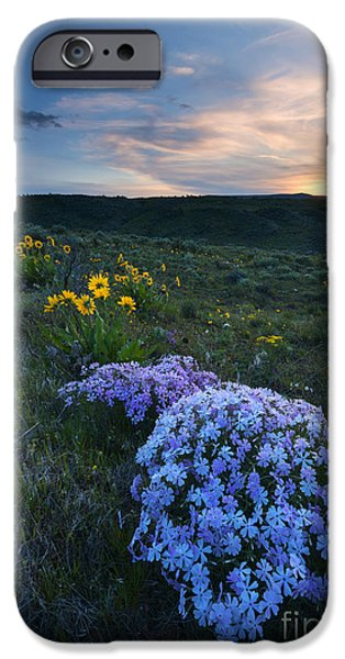 Snowy iPhone Cases - Phlox Sunset iPhone Case by Mike Dawson