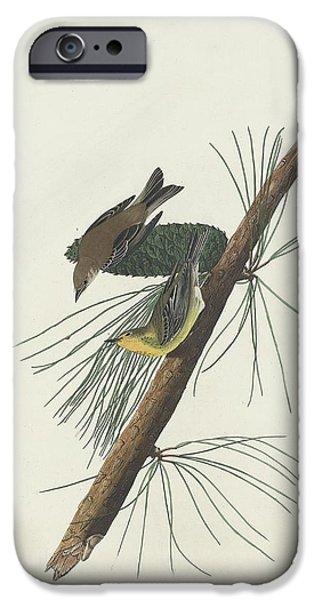 Pines Drawings iPhone Cases - Pine Creeping Warbler iPhone Case by John James Audubon