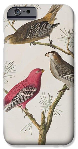 Pines Drawings iPhone Cases - Pine Grosbeak iPhone Case by John James Audubon