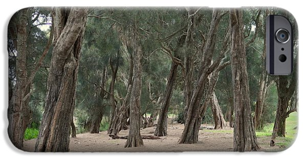 Pathway iPhone Cases - Pine Nettle Pathway iPhone Case by Merrin Jeff