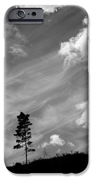 Tree Roots iPhone Cases - Pine silhouettes iPhone Case by Toppart Sweden