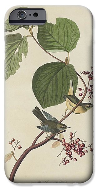 Pines Drawings iPhone Cases - Pine Swamp Warbler iPhone Case by John James Audubon