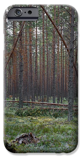 Eerie iPhone Cases - Pine trees broken by heavy snow in the past winter iPhone Case by Intensivelight