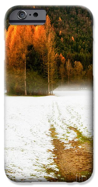 Pathway iPhone Cases - Pines in the snow iPhone Case by Silvia Ganora