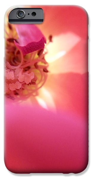 Botanical Photographs iPhone Cases - Pink And Red Rose iPhone Case by Steve Burch