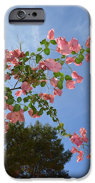 Botanical Photographs iPhone Cases - Pink Bougainvillea iPhone Case by Aimee L Maher Photography and Art