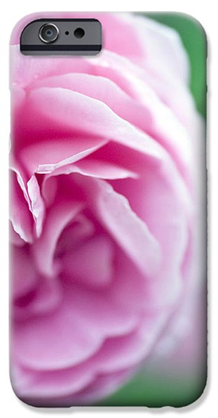 Pink Bourbon Rose LOUISE ODIER iPhone Case by Frank Tschakert
