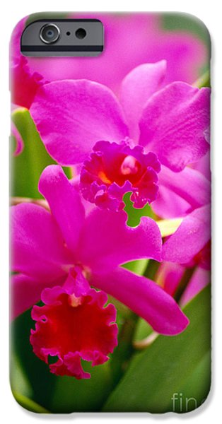 Pink Cattleya Orchids iPhone Case by Allan Seiden - Printscapes