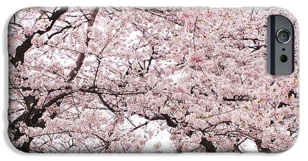 Cherry Blossoms Photographs iPhone Cases - Pink Cherry Blossom Tree iPhone Case by Ariane Moshayedi
